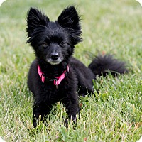 Adopt A Pet :: Bridget - Boise, ID