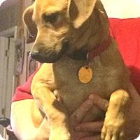 Adopt A Pet :: Punkin - Homer, NY