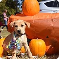 Adopt A Pet :: Holden - Charlemont, MA
