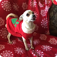 Adopt A Pet :: LUKE - Rancho Cucamonga, CA