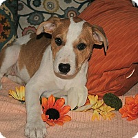 Adopt A Pet :: Penny - Yuba City, CA