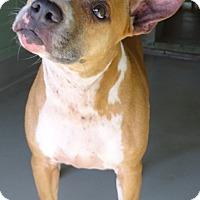Adopt A Pet :: MEISHA - Brooksville, FL