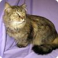 Adopt A Pet :: Andre - Powell, OH