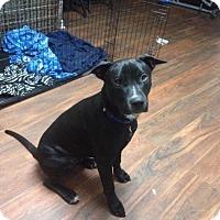 Adopt A Pet :: Ezra - Enfield, CT