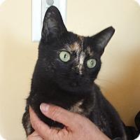 Adopt A Pet :: Jasmine - Cherry Hill, NJ