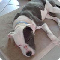 Adopt A Pet :: GRANITE (JW-CP) - Tampa, FL