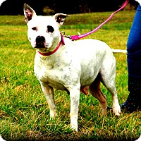 Adopt A Pet :: Punky Brewster~meet me~ - Glastonbury, CT