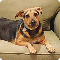 Adopt A Pet :: Mally - Homewood, AL