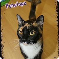 Adopt A Pet :: Penelope - Shippenville, PA