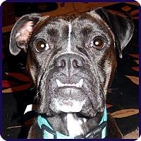 Adopt A Pet :: Lulu - Boise, ID