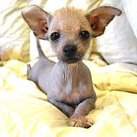 Adopt A Pet :: *Rhyme - PENDING - Westport, CT