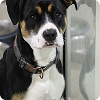 Beagle/Terrier (Unknown Type, Medium) Mix Dog for adoption in Manitowoc, Wisconsin - Kiko