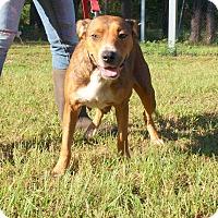 Adopt A Pet :: Annie - Oakdale, LA