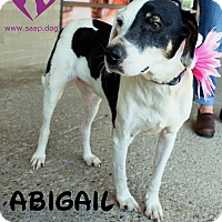 Hound (Unknown Type) Mix Dog for adoption in Newport, Kentucky - Abigail
