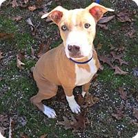 Adopt A Pet :: Russell - Voorhees, NJ