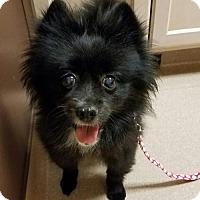 Adopt A Pet :: Jemma - Harrisburg, PA