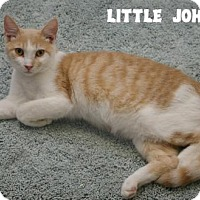 Adopt A Pet :: Little Johnny - Island Heights, NJ