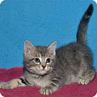 Adopt A Pet :: Brock - Lenexa, KS
