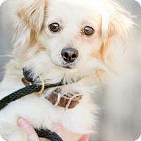 Adopt A Pet :: Austin - Plano, TX