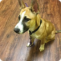 Adopt A Pet :: Gibbs - Nyack, NY