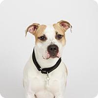 Adopt A Pet :: Joby - Richmond, VA