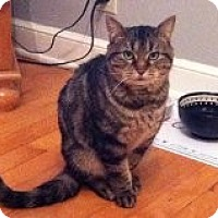 Adopt A Pet :: Cali - Robbinsdale, MN