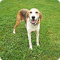 Hound (Unknown Type) Mix Dog for adoption in Rustburg, Virginia - AnnaLee
