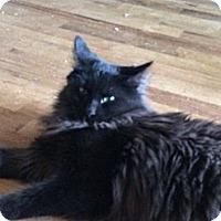 Adopt A Pet :: Mario - Wenatchee, WA