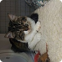 Adopt A Pet :: Zazzles - Chandler, AZ