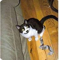Adopt A Pet :: Monkeyface - Portland, ME
