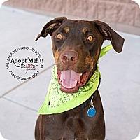 Adopt A Pet :: Barney - Mesa, AZ