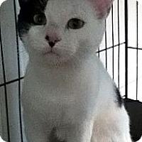 Adopt A Pet :: Babydoll - Alexandria, VA