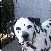 Adopt A Pet :: Orlando - Toronto/Etobicoke/GTA, ON