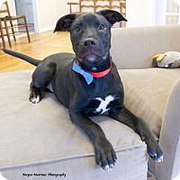 Adopt A Pet :: Squeak - Knoxville, TN