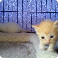 Adopt A Pet :: Rye - Woodstock, GA