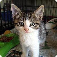 Adopt A Pet :: Hoppie - Island Park, NY