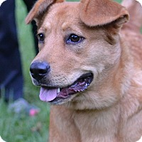 Adopt A Pet :: Goldie - Enfield, CT