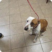 Adopt A Pet :: NOLA - Marion, OH