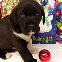 Adopt A Pet :: Trevor - Kimberton, PA