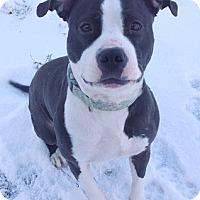 Adopt A Pet :: Georgie - Cincinnati, OH