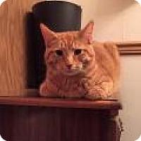 Adopt A Pet :: Kevin - Breinigsville, PA