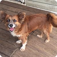 Adopt A Pet :: ROXIE - Houston, TX