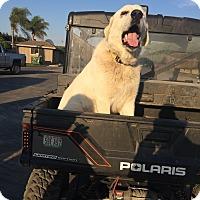 Adopt A Pet :: COOPER - Gustine, CA