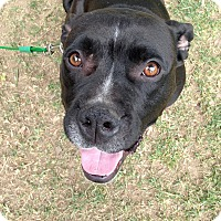 Adopt A Pet :: Bruce - Los Angeles, CA