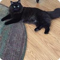 Adopt A Pet :: Smokey - Pineville, NC
