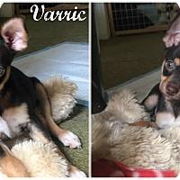 Adopt A Pet :: Varric - Kimberton, PA