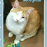 Adopt A Pet :: Georgette - Atco, NJ