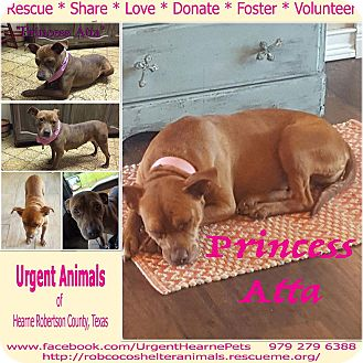 American Pit Bull Terrier Mix Dog for adoption in Hearne, Texas - Princess Atta