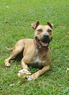 Terrier (Unknown Type, Small) Mix Dog for adoption in Crossville, Tennessee - Holly