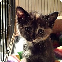 Adopt A Pet :: Checkers - Clarkson, KY